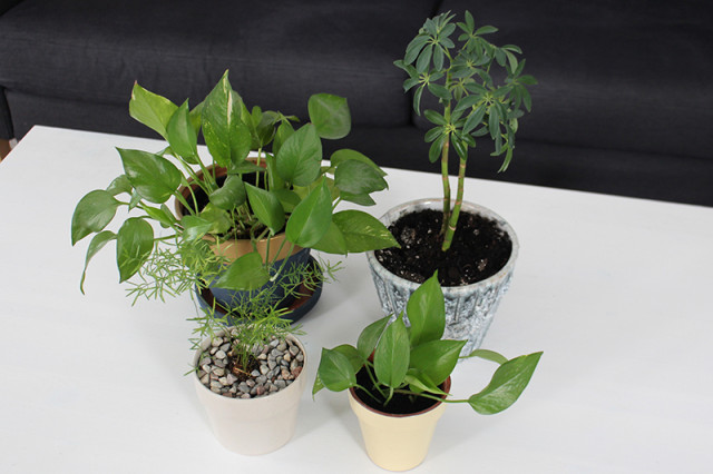 spring-cleaning-houseplants-after