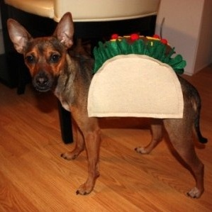 Tutorial: Dog Taco Costume