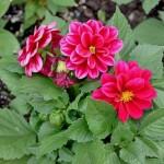 city-garden-update