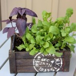 salad-planters