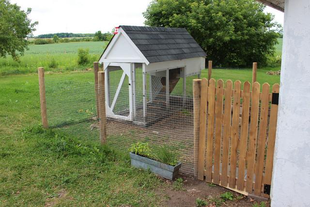 chicken-coop-part-two