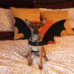 bat-dog-costume