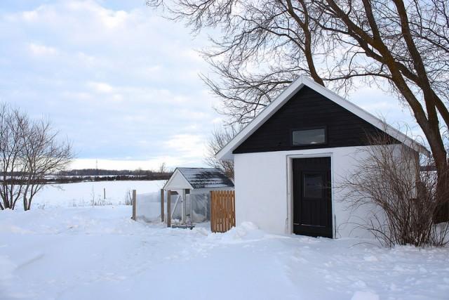 keeping-backyard-chickens-warm-in-winter