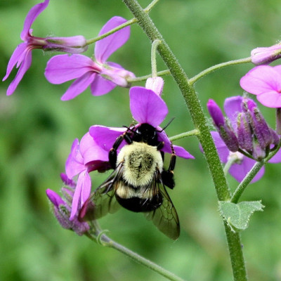 8 Ways You Can Help Bees and Other Pollinators in your Community