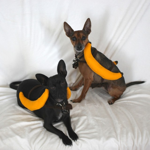 diy-dogs-banana-costume