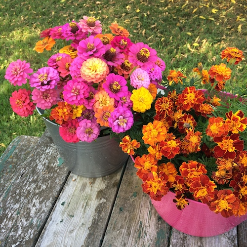 fall-zinnias-marigolds