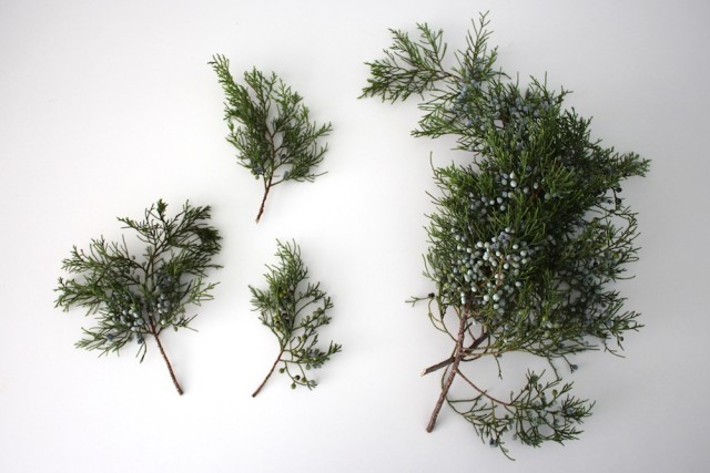 real-juniper-berries-greenery