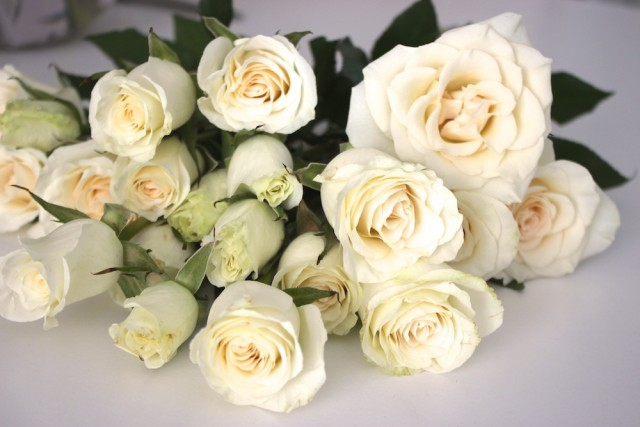 white-spray-roses