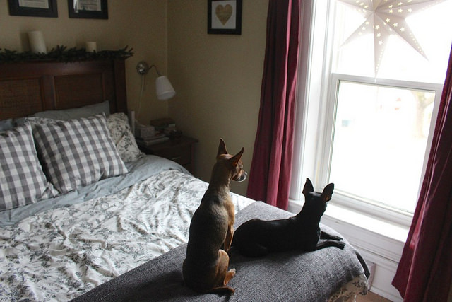 dogs-on-bed