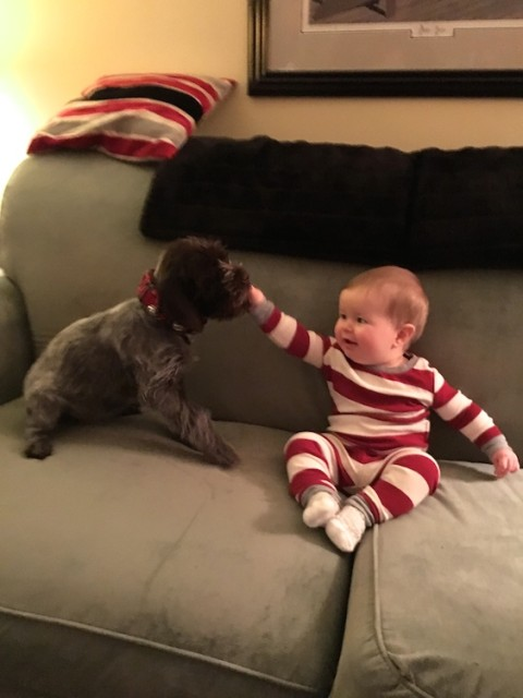 lucy-puppy-licks