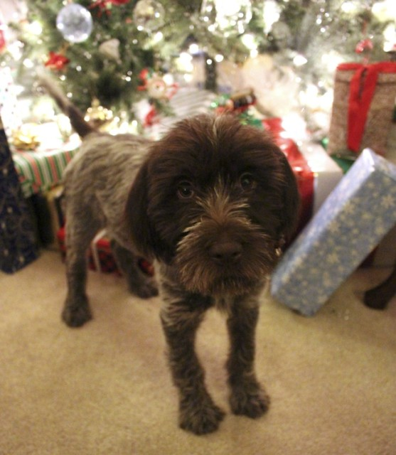 puppy-christmas-tree