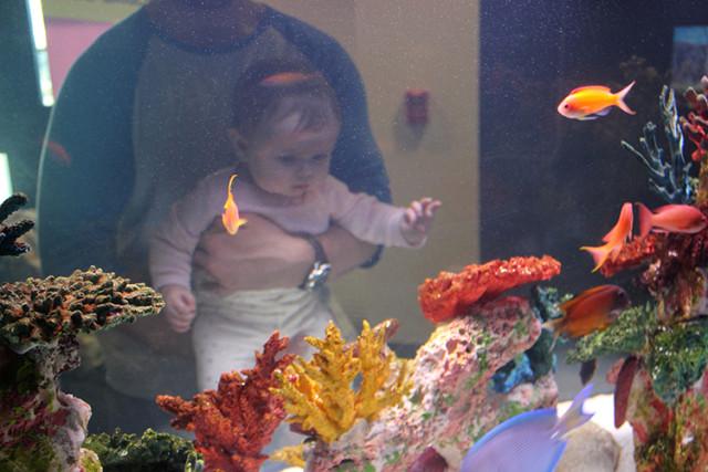 mote-baby-watches-fish