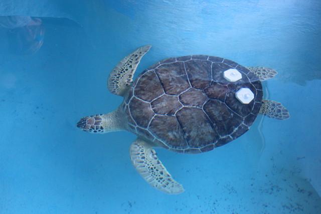 mote-captain-turtle