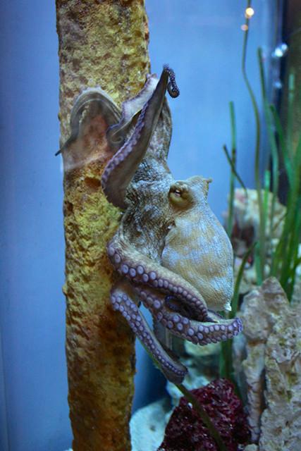 mote-octopus