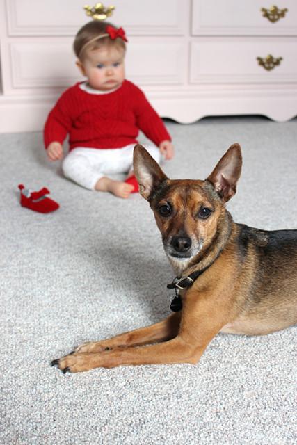 dog-baby-valentines-day