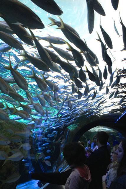 ripleys-aquarium-toronto-lagoon