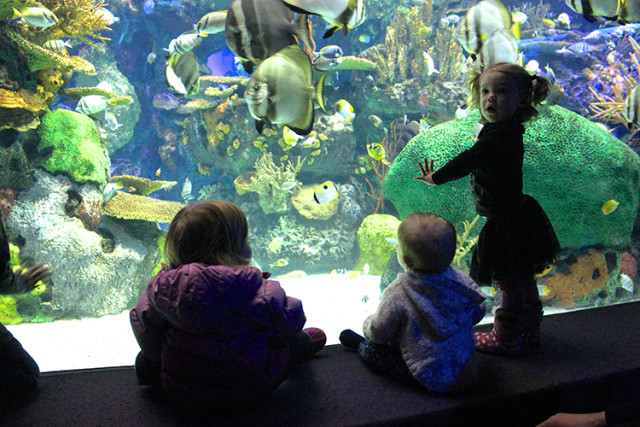 ripleys-aquarium-toronto-little-girls