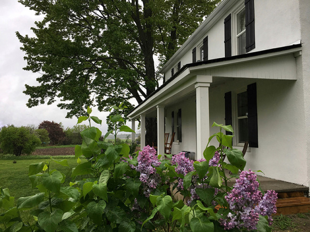 front-porch-lilacs