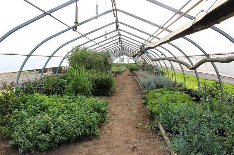 la-primavera-greenhouse