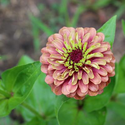 August in the Flower Field