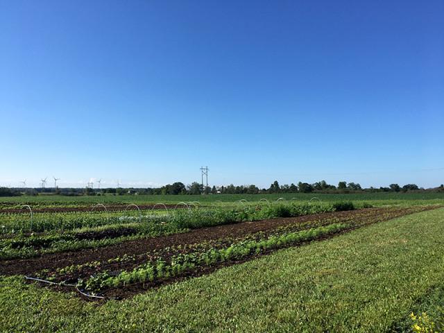 wendalane-farm-field
