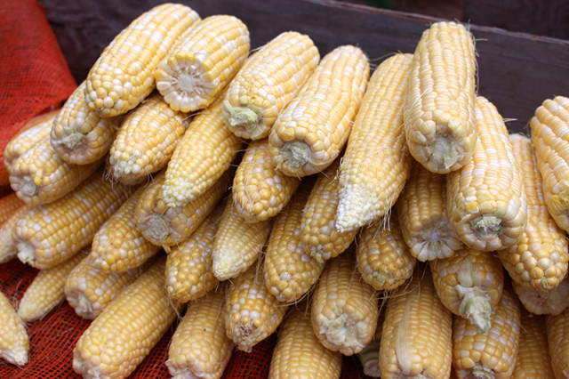 stack-corn-cob