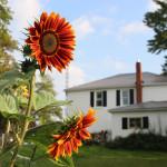 autumn-beauty-farmhouse