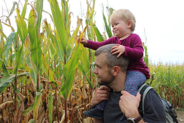 corn-maze-dads-shoulders