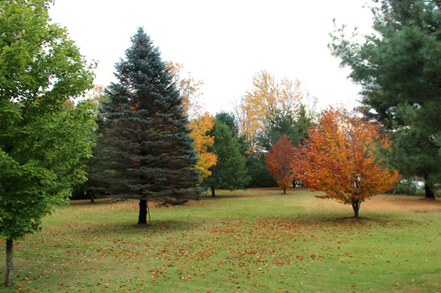 fall-leaves-colour-yard
