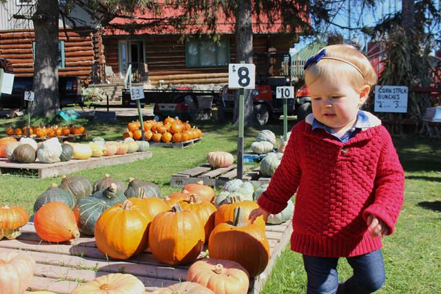 lucy-pumpkin-patch
