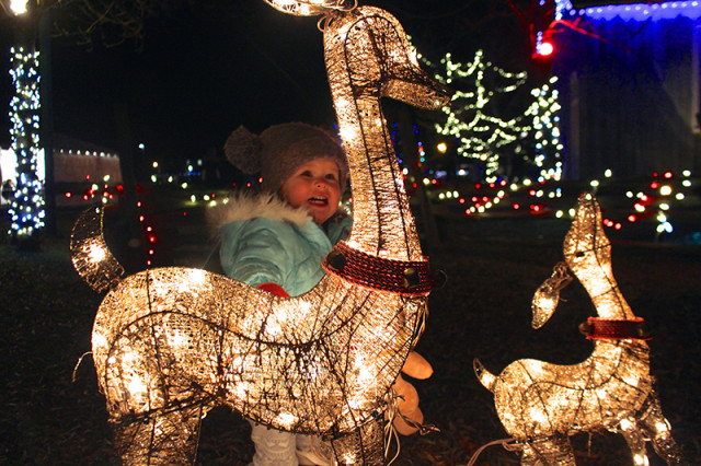 christmas-reindeer-lights