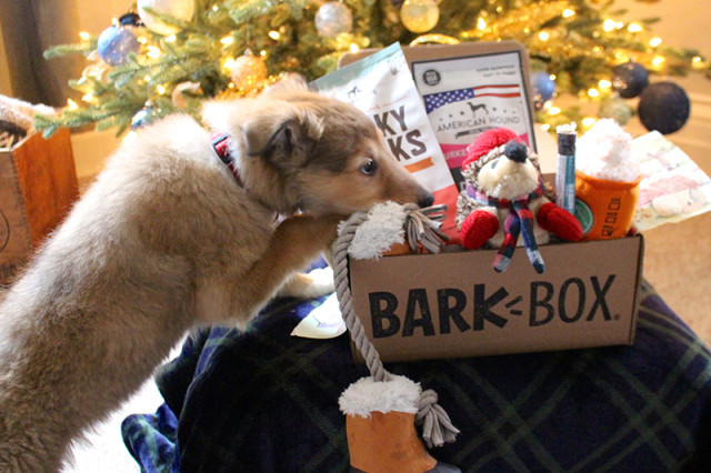 puppy-barkbox-review