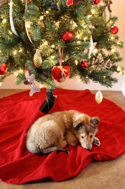 willow-collie-puppy-christmas-tree