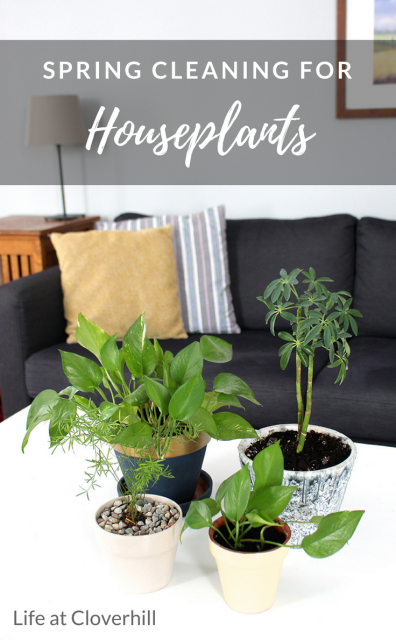how-to-spring-clean-house-plants