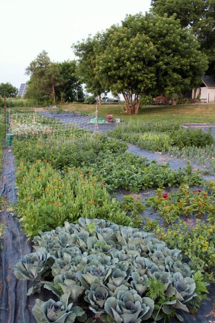 cloverhill-flower-field-2018-rose-crane-kale