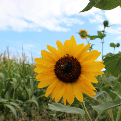 Late Summer in the Flower Field and Teaching Workshops